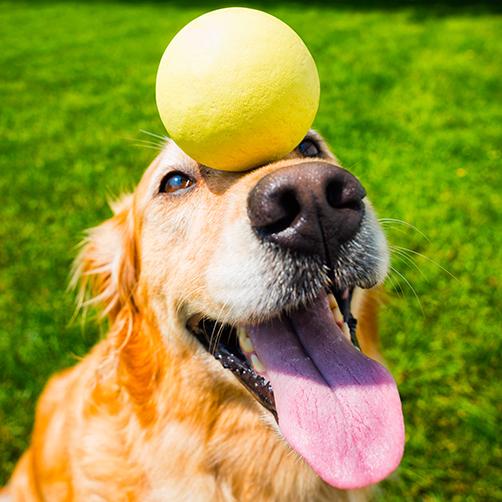 5 Fun Tricks To Teach Your Pup!