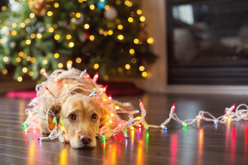 Holiday Prep for Your Pets