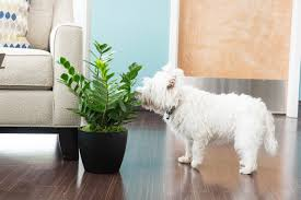 Indoor plants that may poison your dog