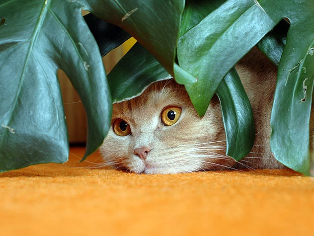 Plants That Are Safe For Pets