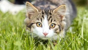 Cat Grass and Cat Nip